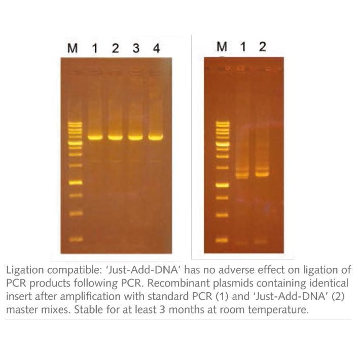 مستر میکس DNA