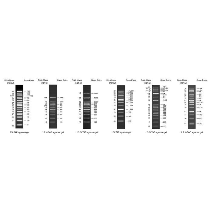 مارکر های مولکولی | نشانگر DNA دی ان ای (DNA Markers)